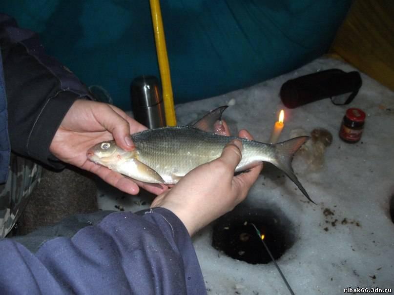 рыбалка на белоярском водохранилище свердловская область