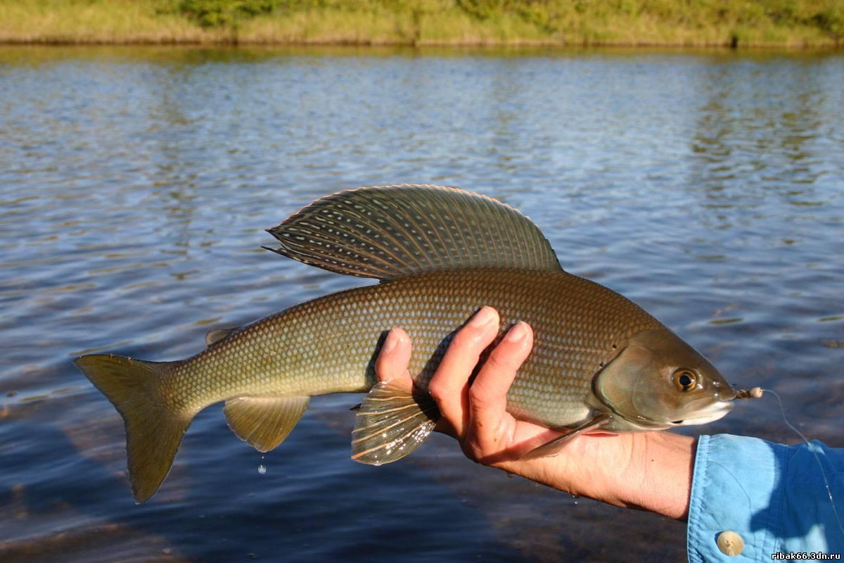 способы ловли рыбы на озере