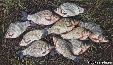 при западном ветре рыба клюет