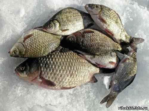 где ловится рыба в рязани